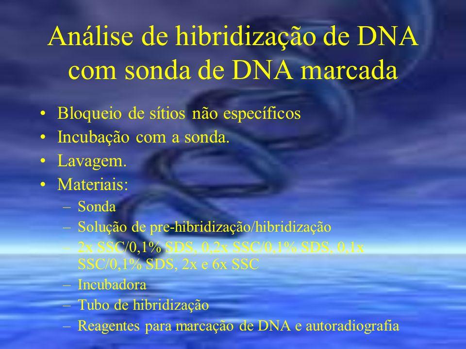 Análise de hibridização de DNA com sonda de DNA marcada