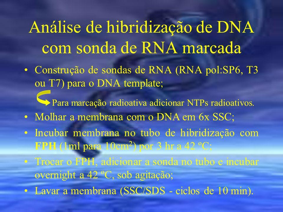 Análise de hibridização de DNA com sonda de RNA marcada