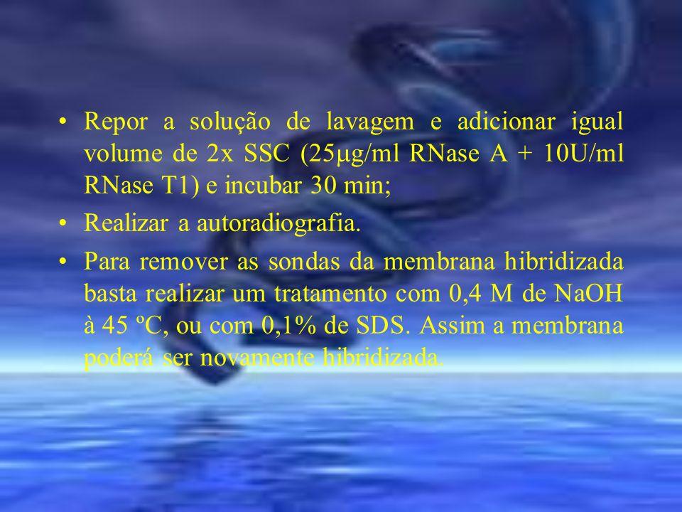 Repor a solução de lavagem e adicionar igual volume de 2x SSC (25g/ml RNase A + 10U/ml RNase T1) e incubar 30 min;
