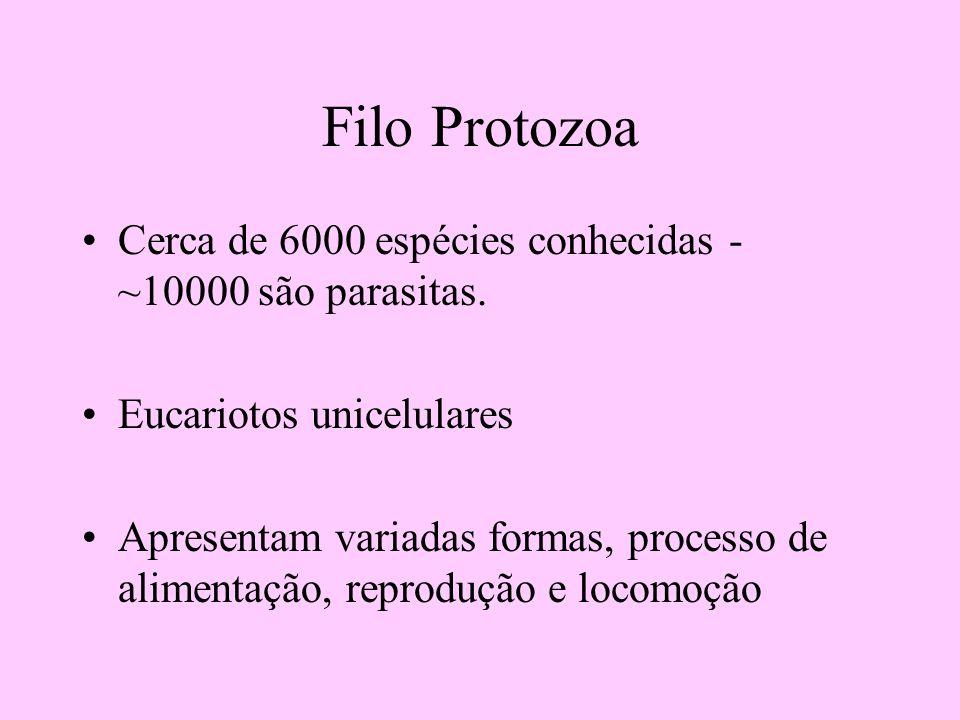 Filo Protozoa Cerca de 6000 espécies conhecidas - ~10000 são parasitas. Eucariotos unicelulares.