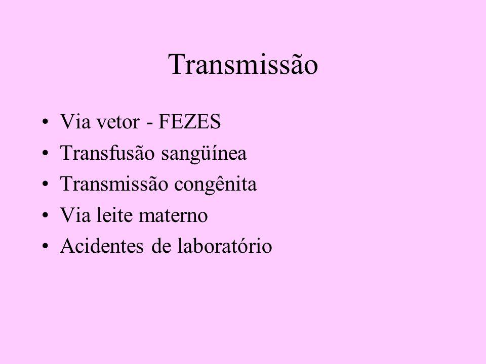 Transmissão Via vetor - FEZES Transfusão sangüínea