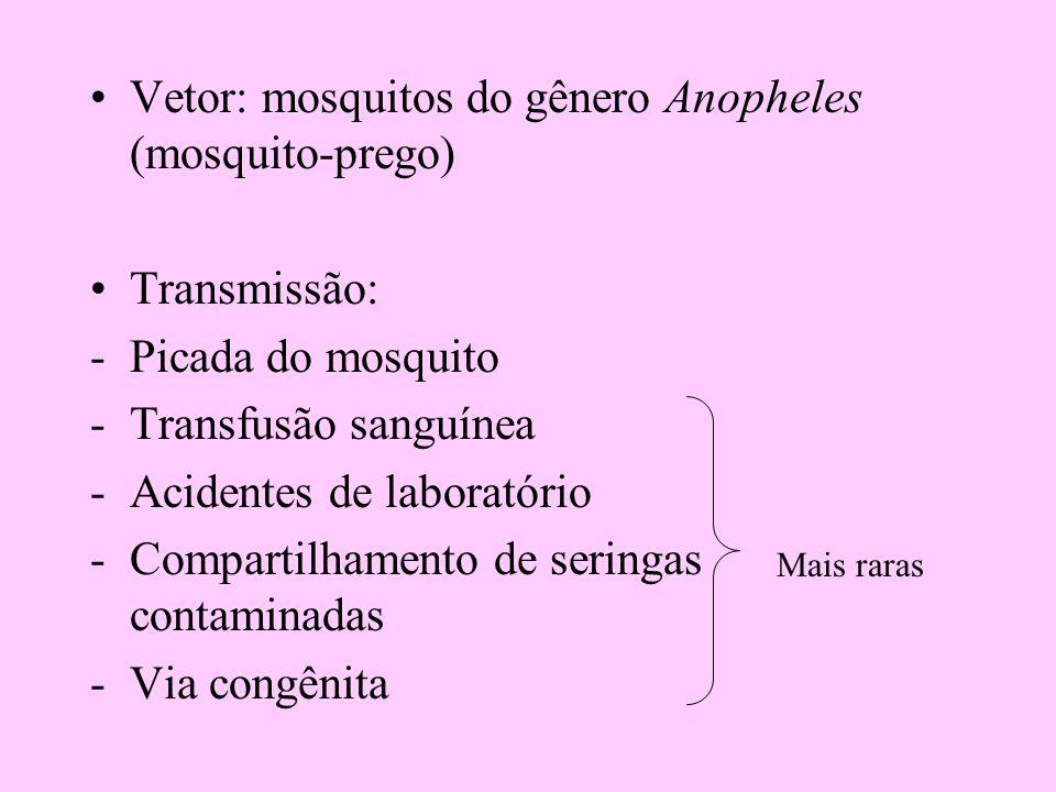 Vetor: mosquitos do gênero Anopheles (mosquito-prego)