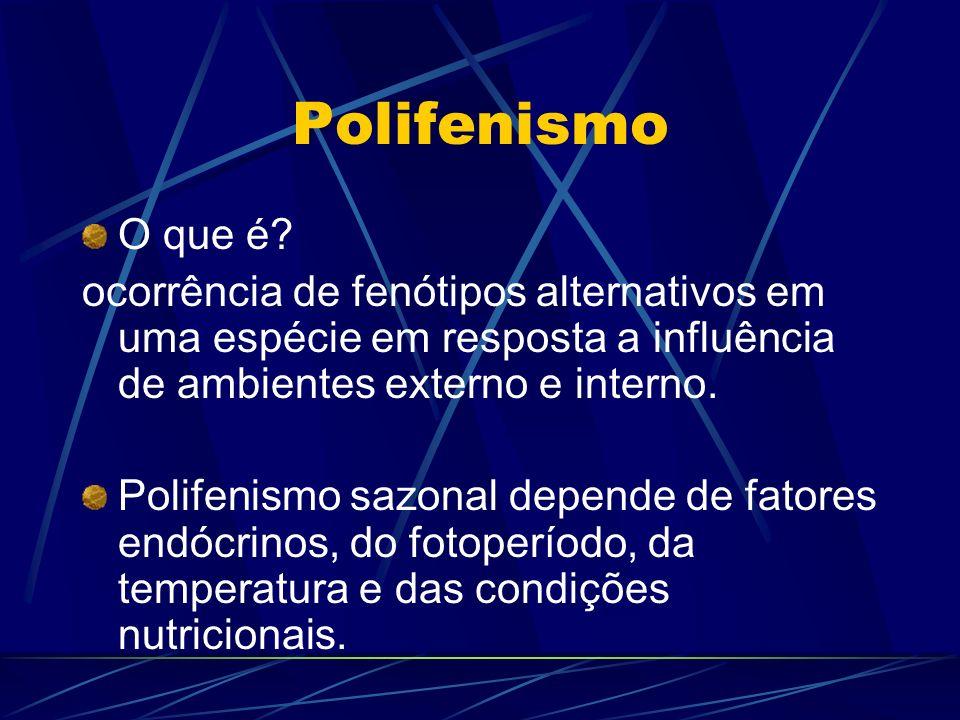 Polifenismo O que é ocorrência de fenótipos alternativos em uma espécie em resposta a influência de ambientes externo e interno.