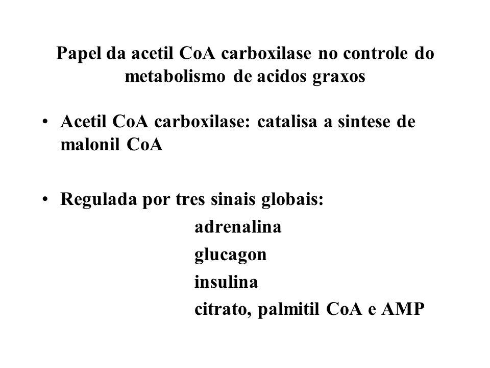 Papel da acetil CoA carboxilase no controle do metabolismo de acidos graxos