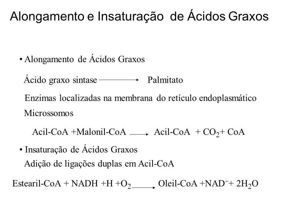 Acil-CoA +Malonil-CoA Acil-CoA + CO2+ CoA