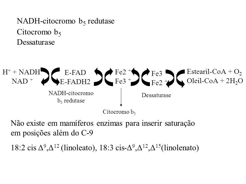 NADH-citocromo b5 redutase Citocromo b5 Dessaturase