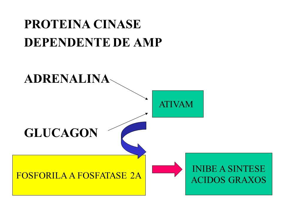 FOSFORILA A FOSFATASE 2A