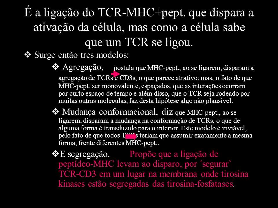 É a ligação do TCR-MHC+pept