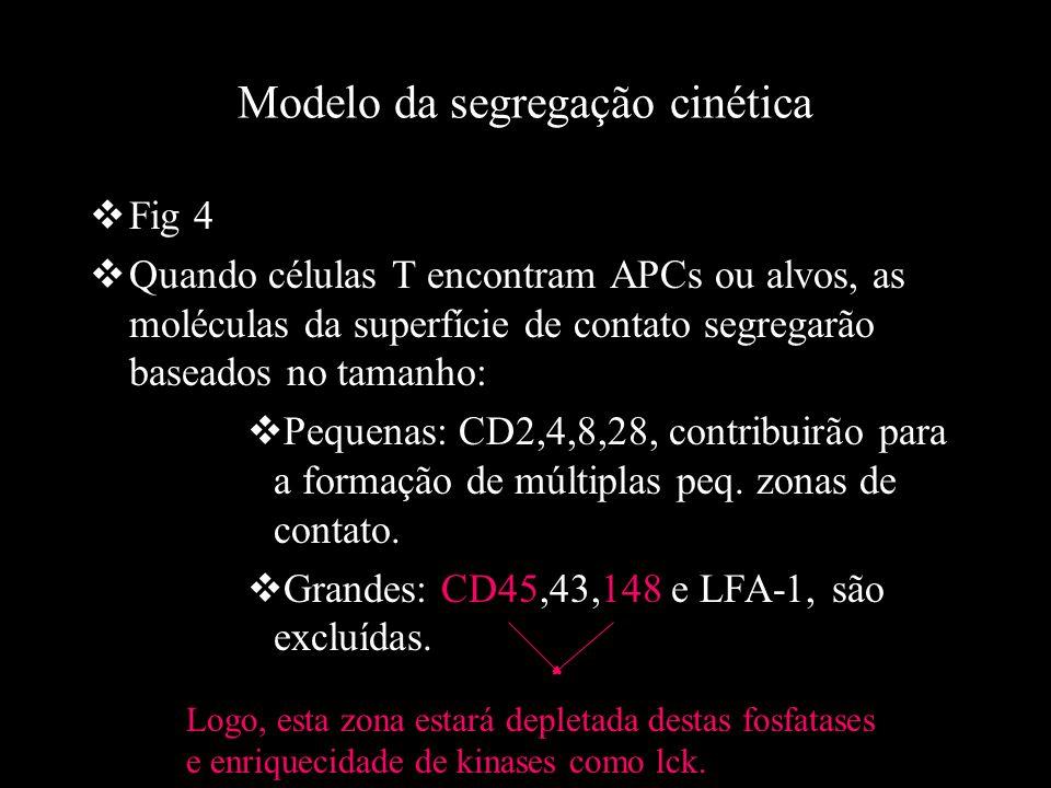 Modelo da segregação cinética