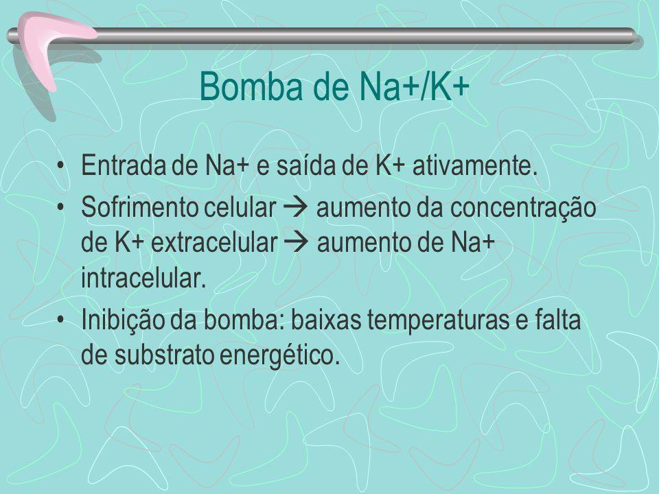 Bomba de Na+/K+ Entrada de Na+ e saída de K+ ativamente.