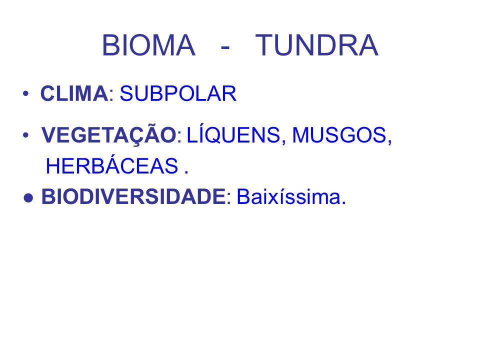 BIOMA - TUNDRA CLIMA: SUBPOLAR VEGETAÇÃO: LÍQUENS, MUSGOS, HERBÁCEAS .