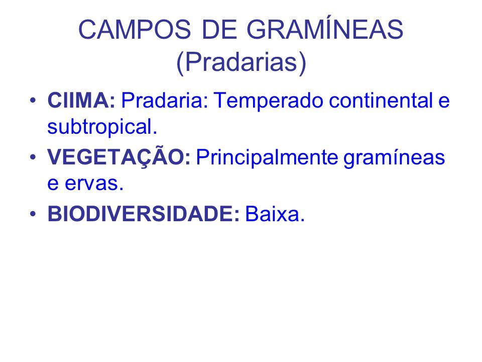 CAMPOS DE GRAMÍNEAS (Pradarias)