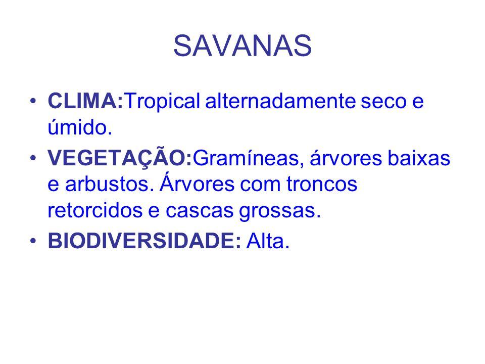 SAVANAS CLIMA:Tropical alternadamente seco e úmido.