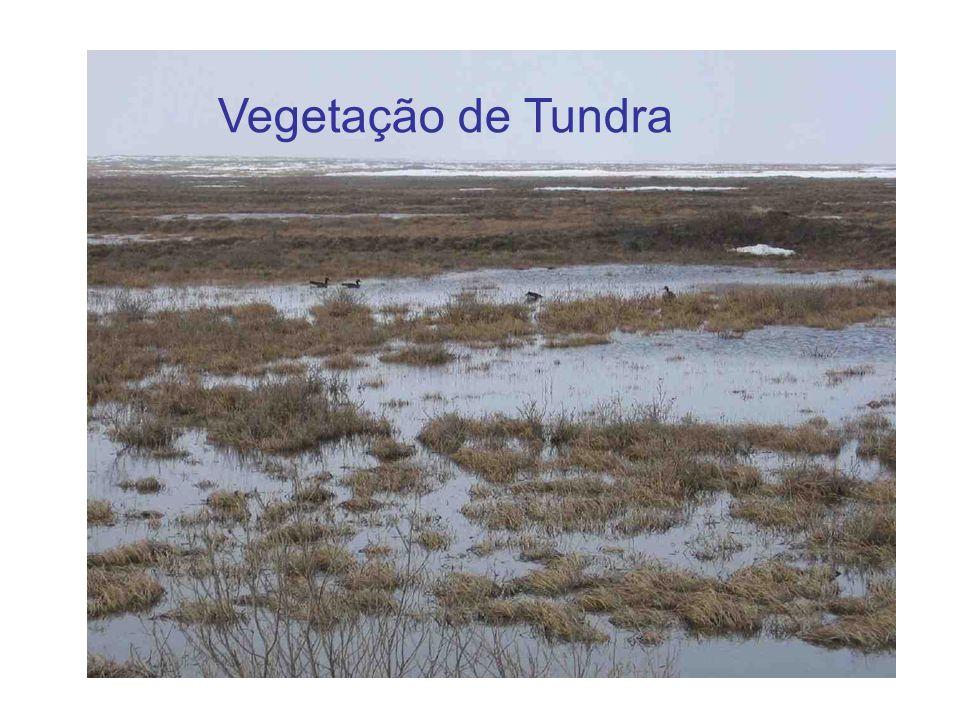 Vegetação de Tundra