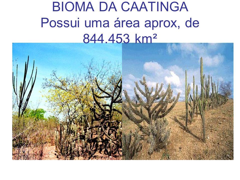 BIOMA DA CAATINGA Possui uma área aprox, de 844.453 km²