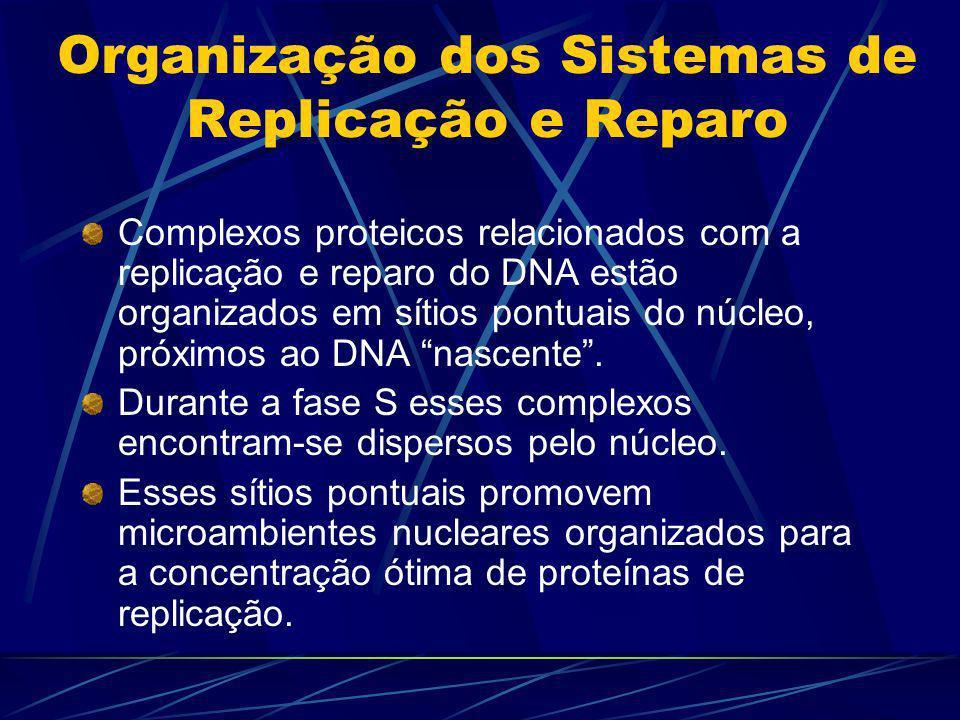 Organização dos Sistemas de Replicação e Reparo