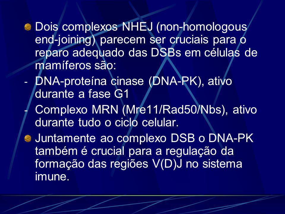 Dois complexos NHEJ (non-homologous end-joining) parecem ser cruciais para o reparo adequado das DSBs em células de mamíferos são:
