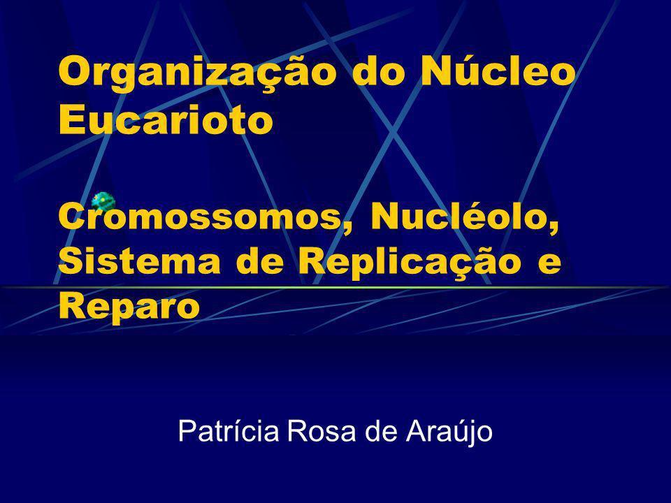 Patrícia Rosa de Araújo
