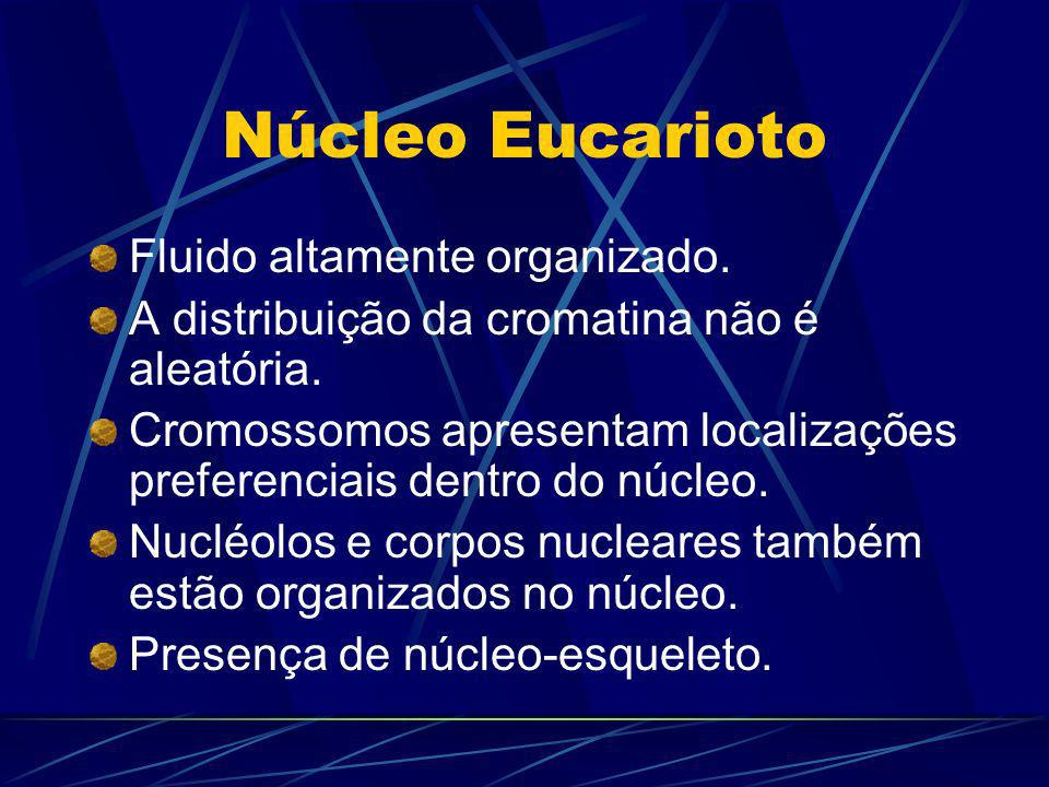 Núcleo Eucarioto Fluido altamente organizado.