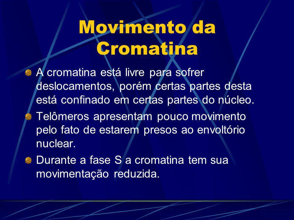 Movimento da Cromatina