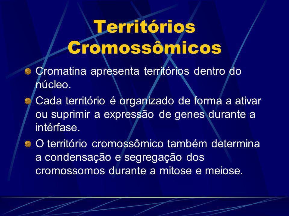 Territórios Cromossômicos