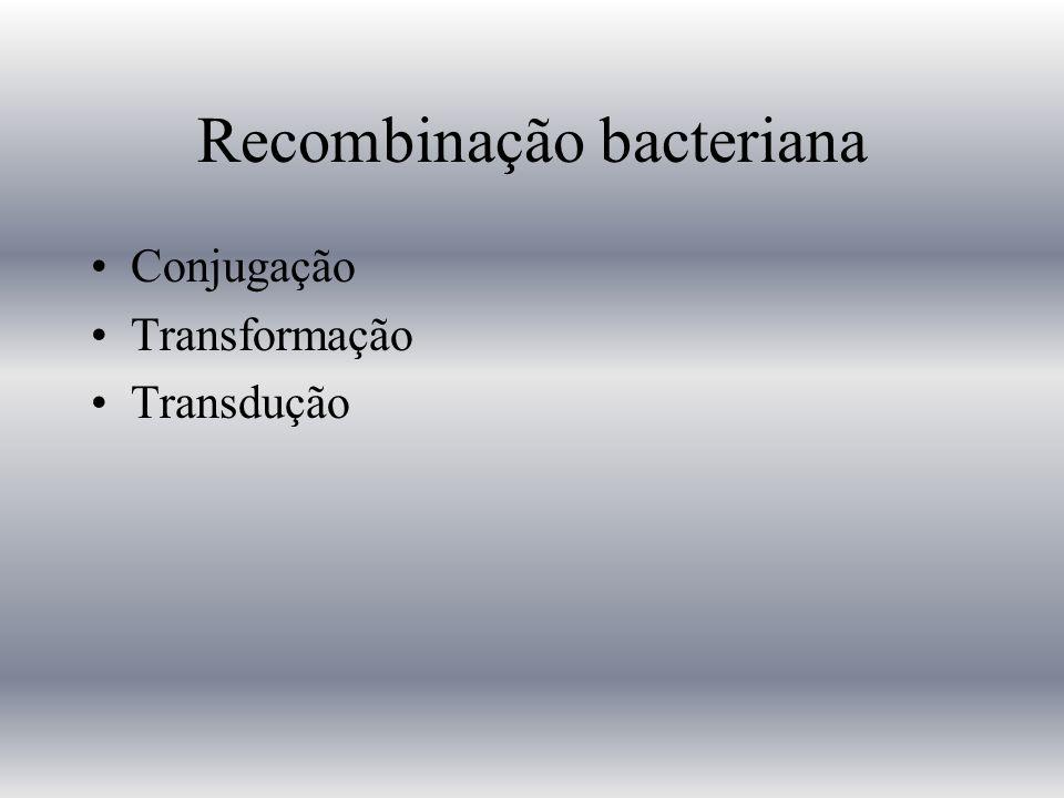 Recombinação bacteriana