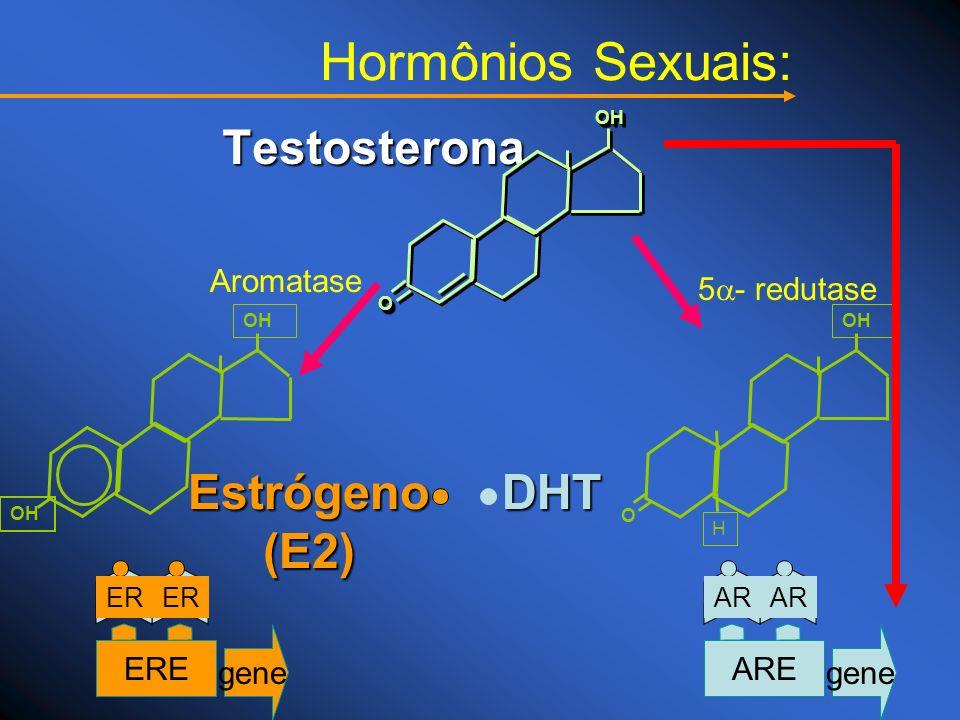 Hormônios Sexuais: Estrógeno (E2) DHT Testosterona Aromatase