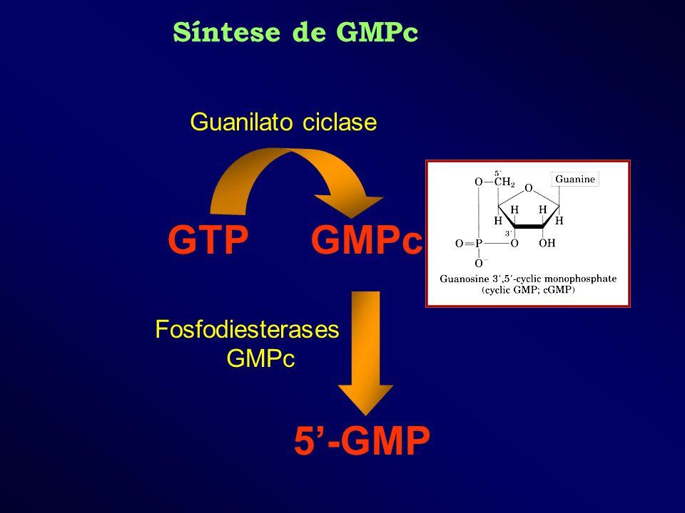 Fosfodiesterases GMPc