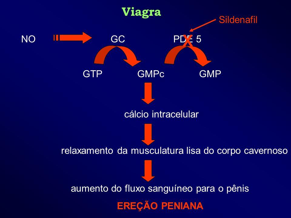 aumento do fluxo sanguíneo para o pênis