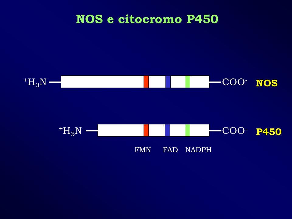 NOS e citocromo P450 +H3N COO- NOS +H3N COO- P450 FMN FAD NADPH