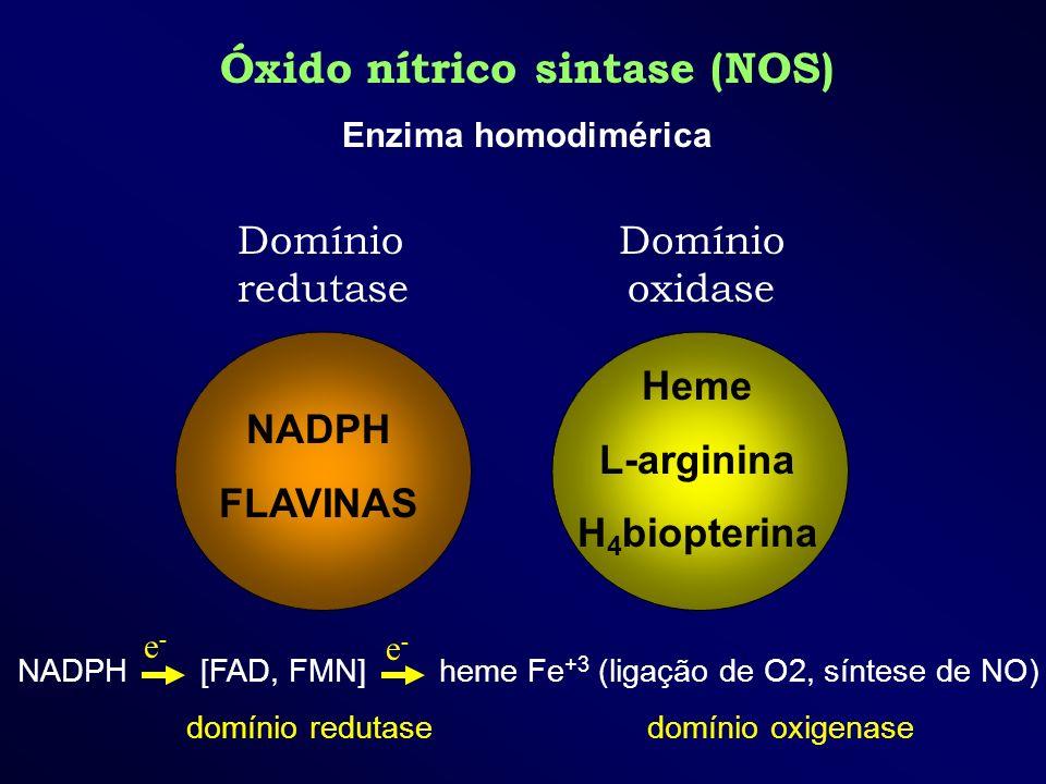 Óxido nítrico sintase (NOS)