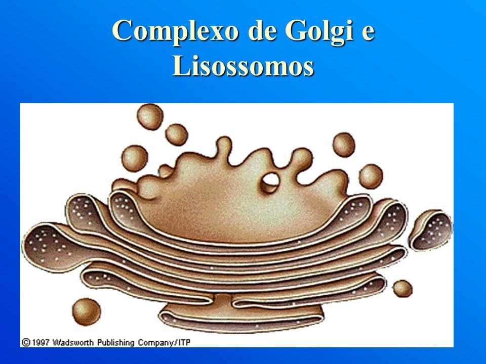 Complexo de Golgi e Lisossomos