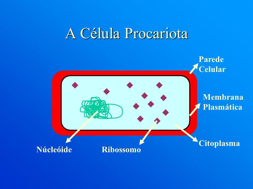 A Célula Procariota Parede Celular Membrana Plasmática Citoplasma
