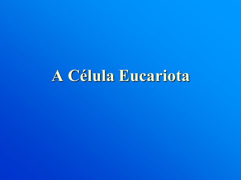 A Célula Eucariota