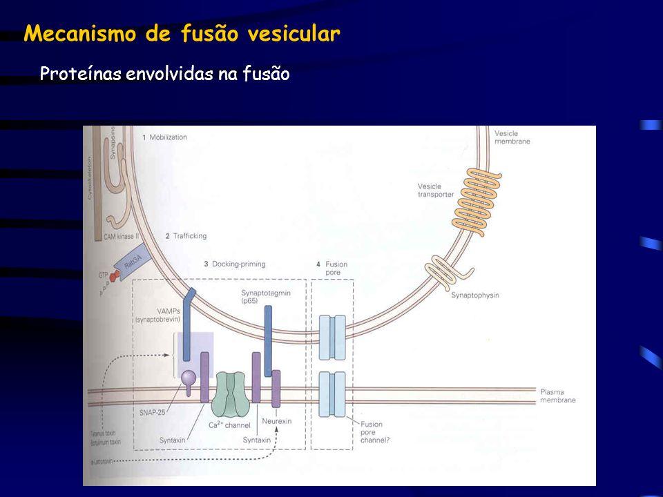 Mecanismo de fusão vesicular