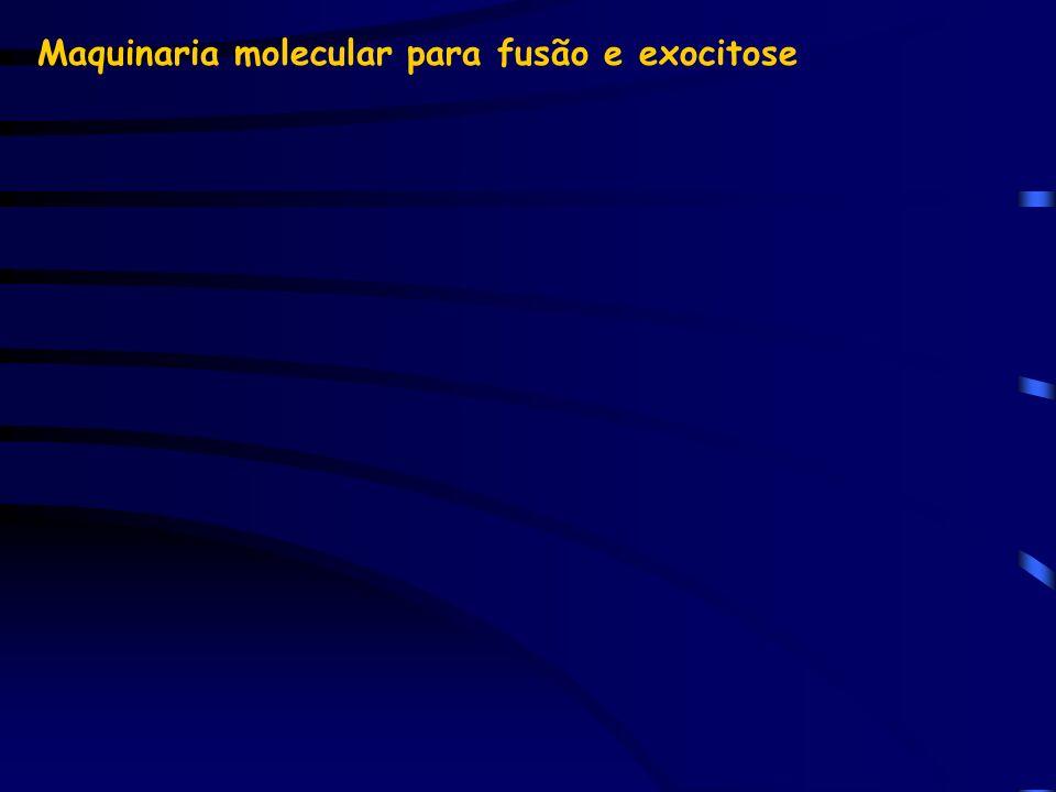Maquinaria molecular para fusão e exocitose