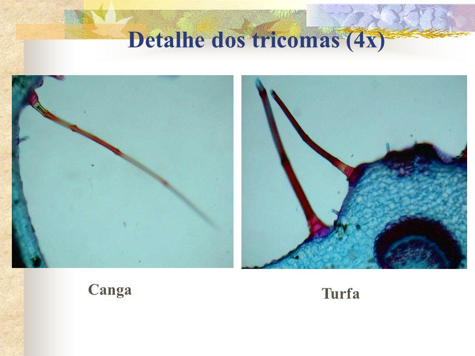 Detalhe dos tricomas (4x)