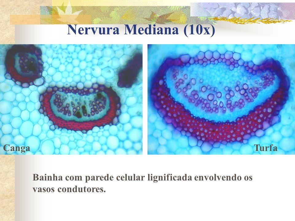 Nervura Mediana (10x) Canga Turfa