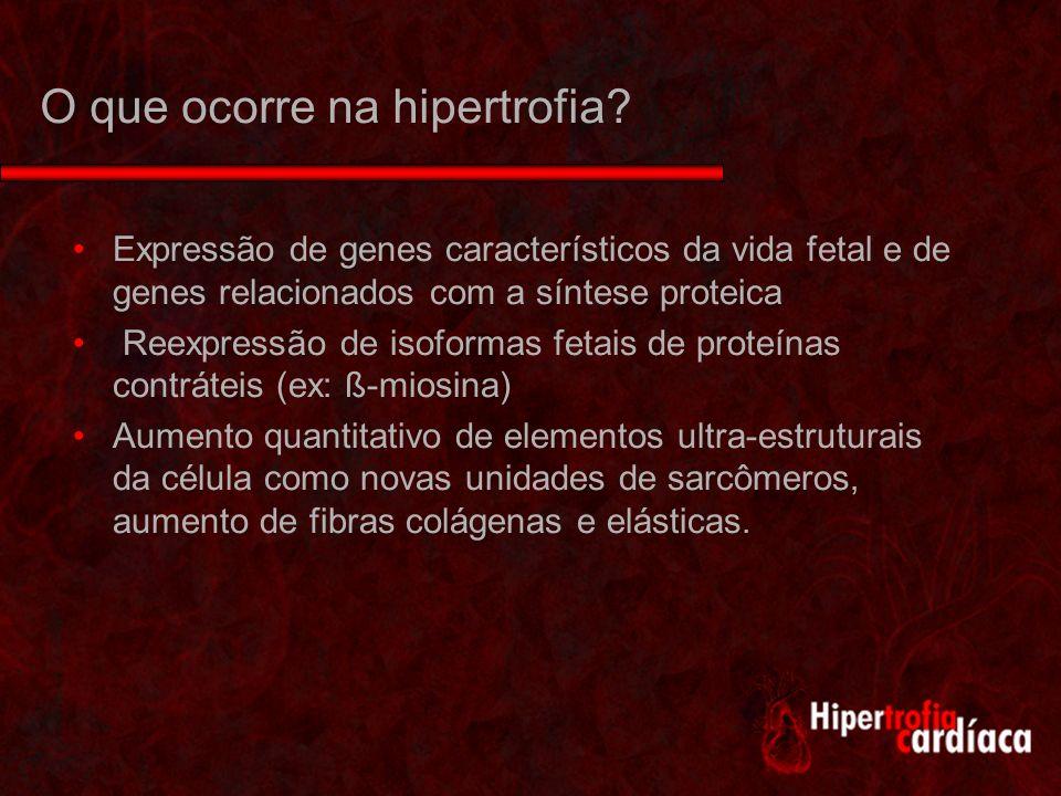 O que ocorre na hipertrofia
