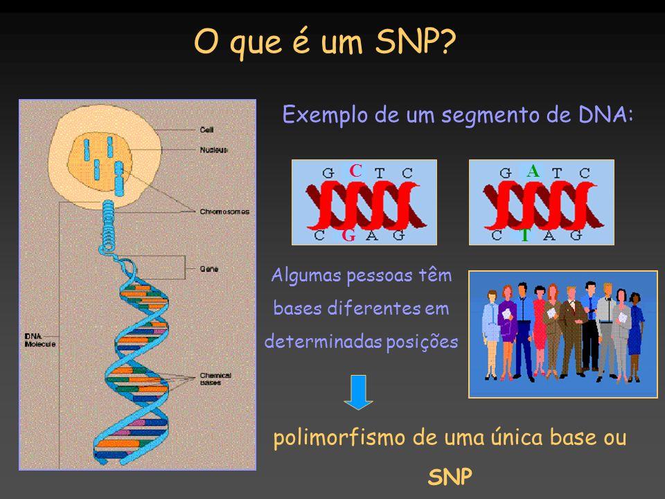 O que é um SNP Exemplo de um segmento de DNA: