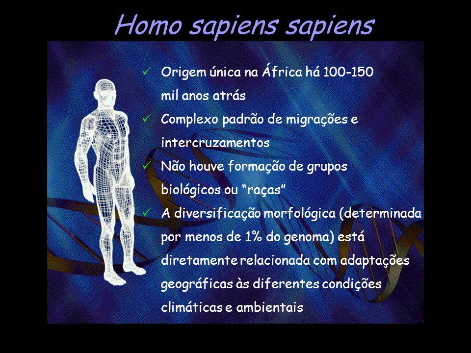 Homo sapiens sapiens Origem única na África há 100-150 mil anos atrás