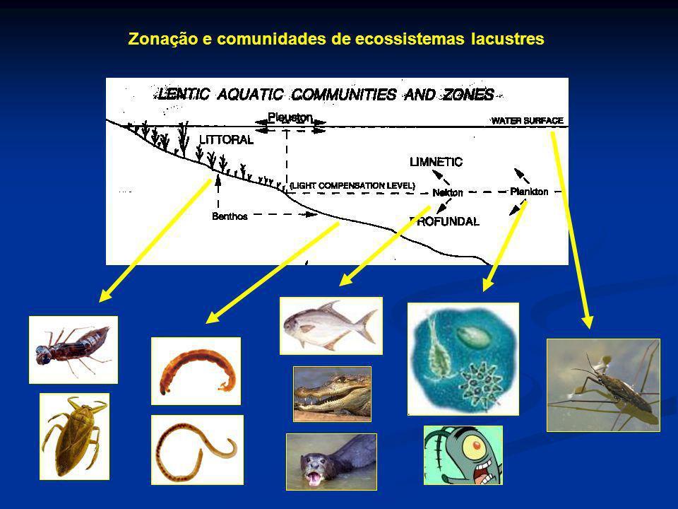 Zonação e comunidades de ecossistemas lacustres