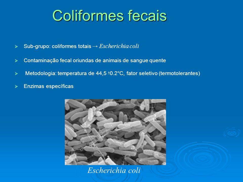 Coliformes fecais Escherichia coli