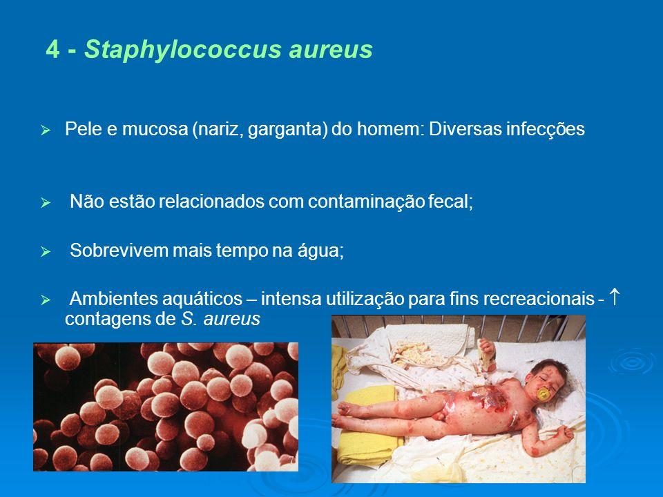 4 - Staphylococcus aureus