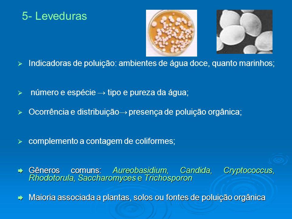 5- Leveduras Indicadoras de poluição: ambientes de água doce, quanto marinhos; número e espécie → tipo e pureza da água;