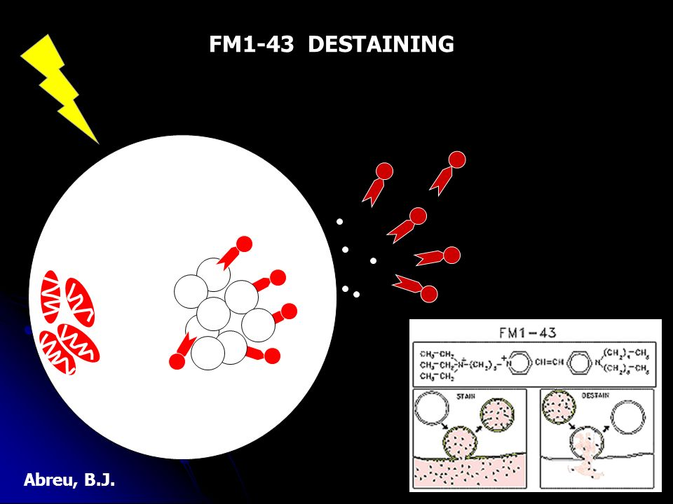 FM1-43 DESTAINING Abreu, B.J.
