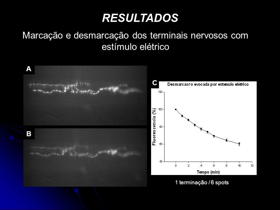Marcação e desmarcação dos terminais nervosos com estímulo elétrico