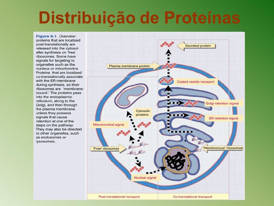 Distribuição de Proteínas