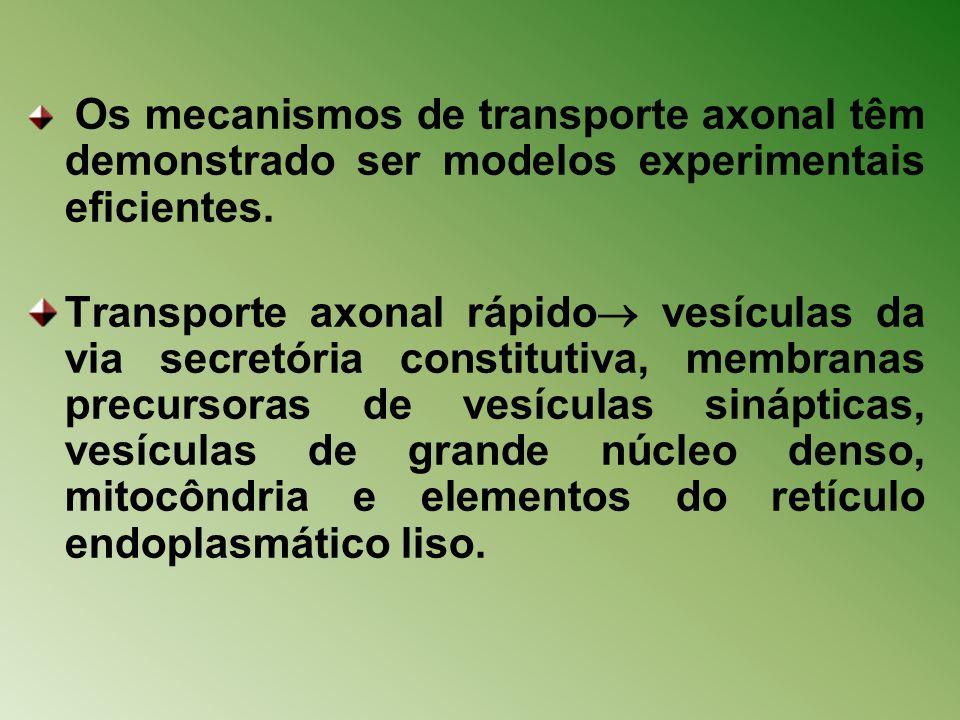 Os mecanismos de transporte axonal têm demonstrado ser modelos experimentais eficientes.