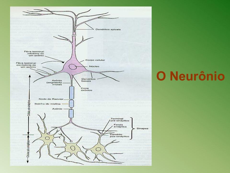 O Neurônio